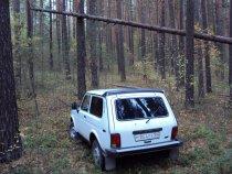 Шлагбаум в лесу...