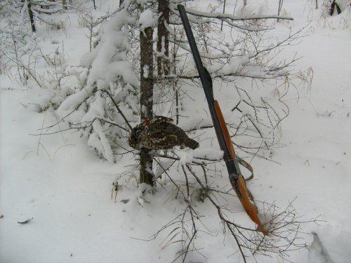 Рябок по снегу.