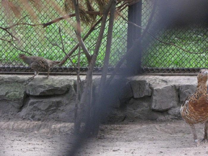 мамаша с птенцом