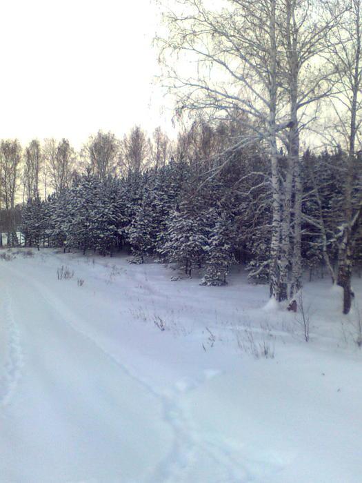 Леса...красота