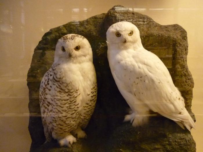 Музей природы.  Подружки.