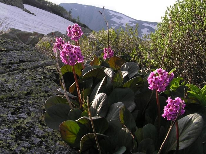 Весна, всё цветёт и пахнет!