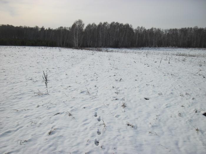 Первый гонный в этом сезоне , по снегу.....
