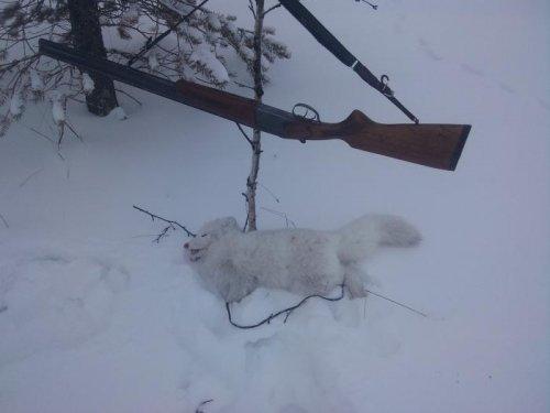 искал рыжого нашол белого