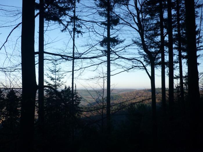 Безбрежные леса...