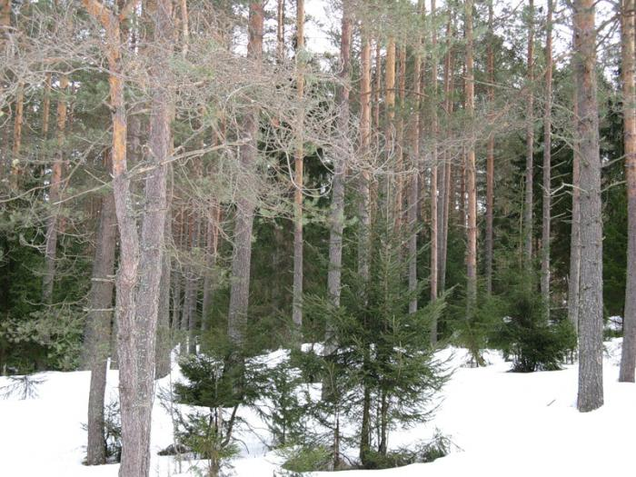 зима сибирская