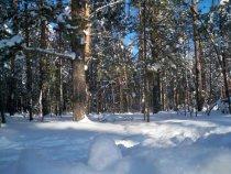 Лес 4