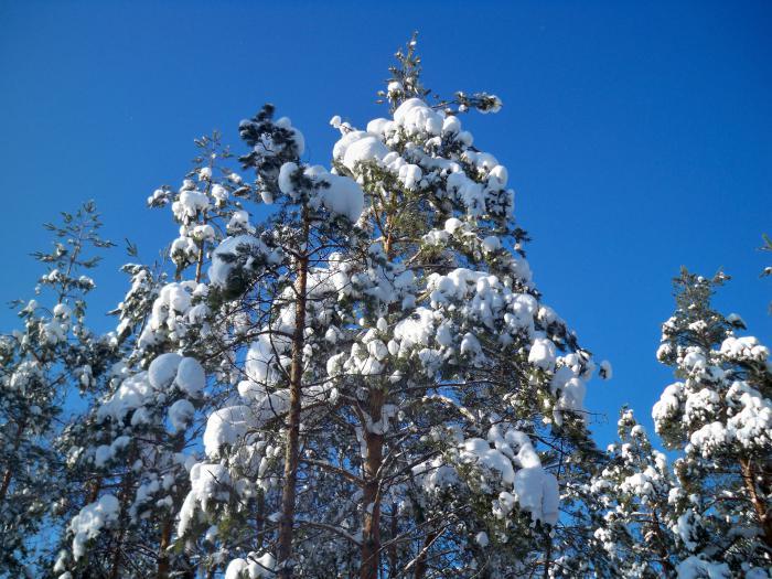 Сказка ,а не зима............