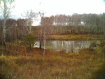 прудик в лесу
