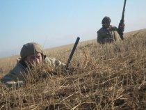 в скрадке охота на гуся.