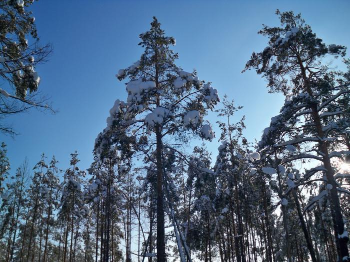 Лес 3