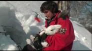Поймать зайца руками