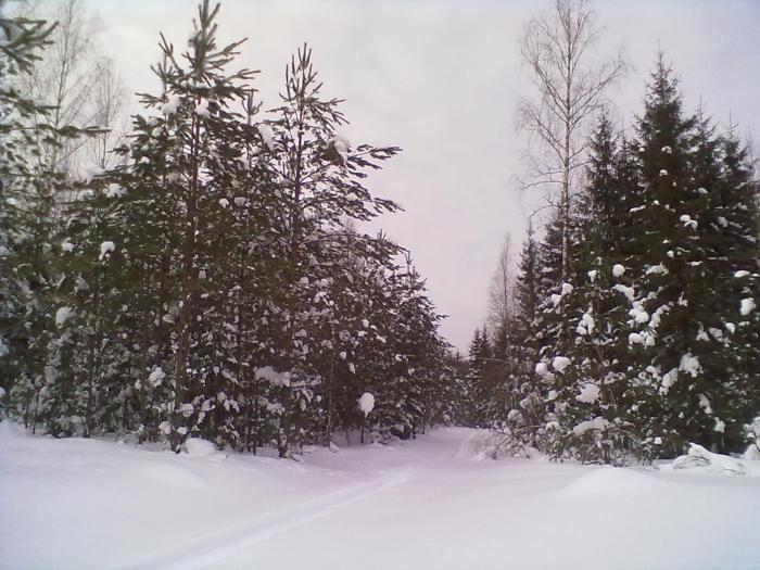 Новгородская природа..........
