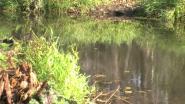 Бобриная плотина