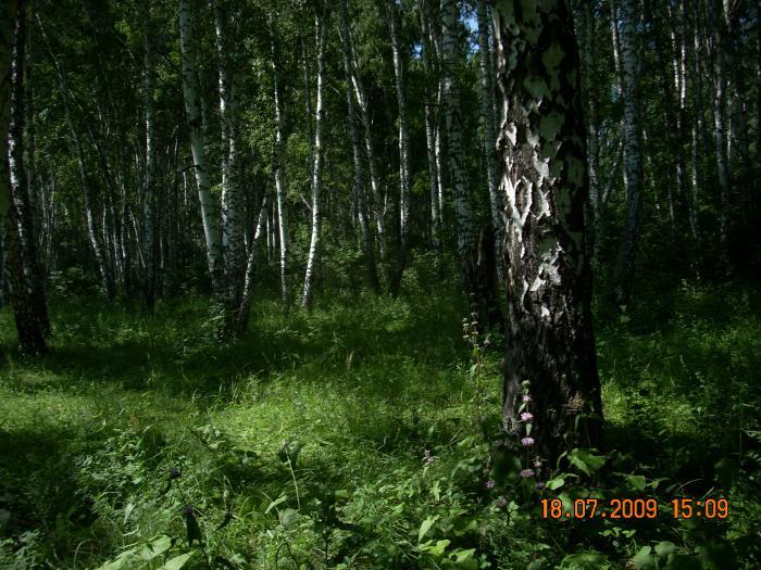 Наш грибной лес