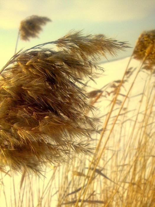 Ветер гладит