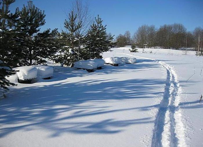 Весенняя лыжня!
