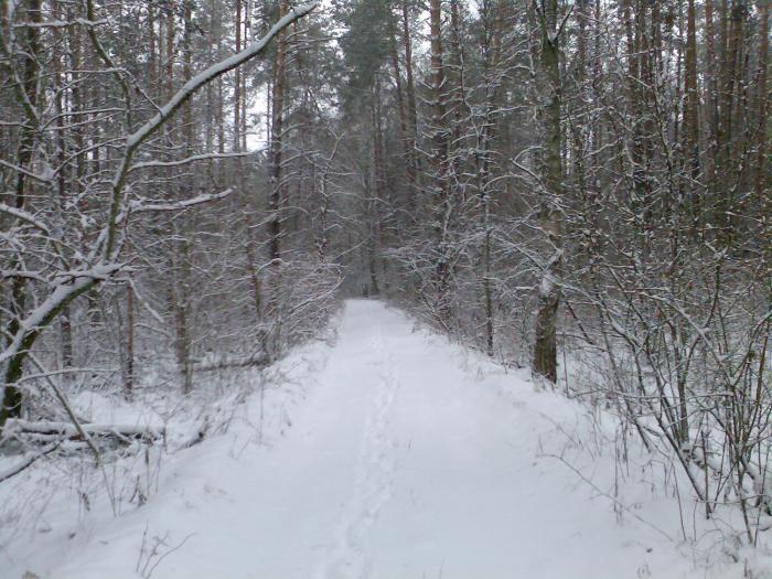 наш лес