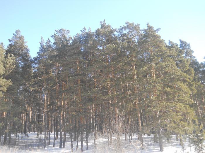 последние деньки Зимы )))