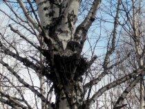 Истребительница грызунов на гнезде