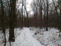 Первый снег в лесу.