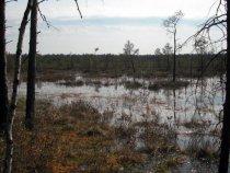 верховое болото