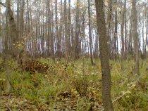 Ольховая роща осенью