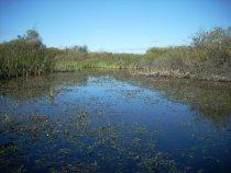 Тихое утро на болоте