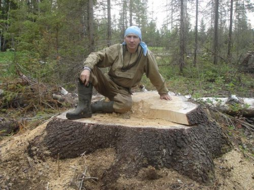 на Урале тоже бывают деревья...