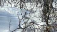 Косуля по глубокому снегу