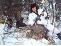 Охота на кабана с лайками. Горный Алтай.