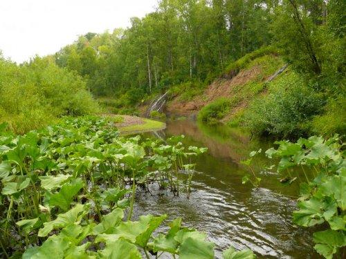река Заломная