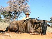 Голубой гну. Калахари, Намибия.