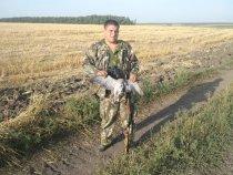 13.08.2011 Открытие голубь,перепел