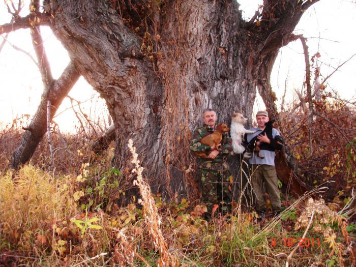 местные называют его- дерево ЛЮБВИ!