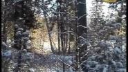Фильм про охотника Александра Зубова (часть 3)