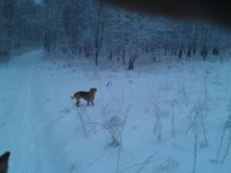 утро, снег, лес.. ищем зайку..