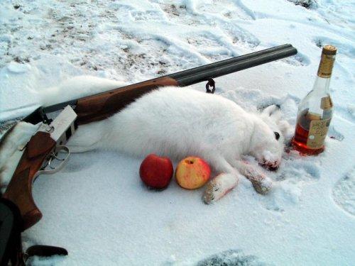 Яблоки на снегу... :)