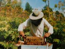 Так добывается мёд в тайге