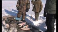 Охота в Якутии, заполярье. Овцебыки.