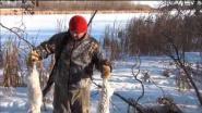 Охота на зайца в Канаде