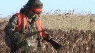 Фазаны, зайцы и охотники