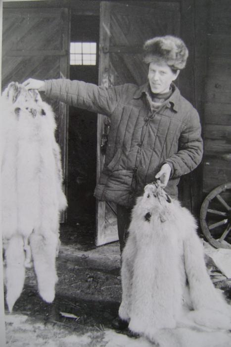 Горьковская РзК.март 1984г.Лисица сданная охотниками .