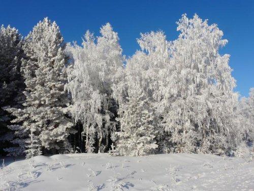 Мороз украсил все вокруг.