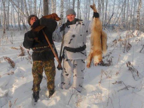 Зимняя охота на лис с таксой.