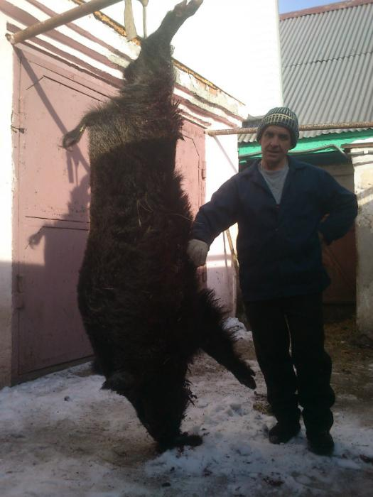 Фото от украинских охотников!!