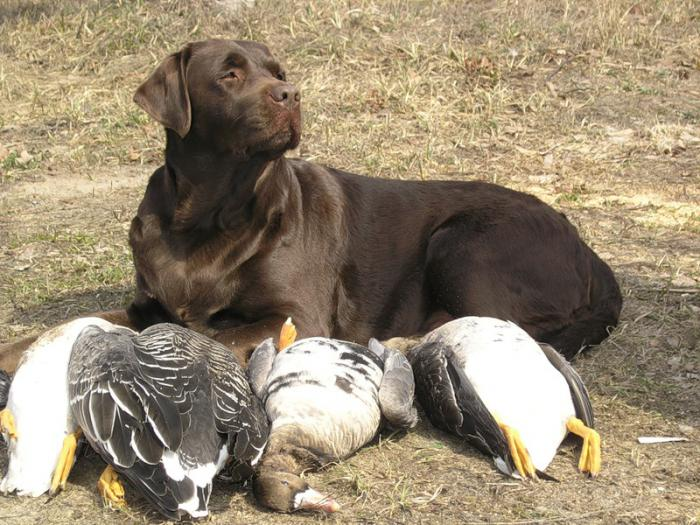 Весенняя охота 2011