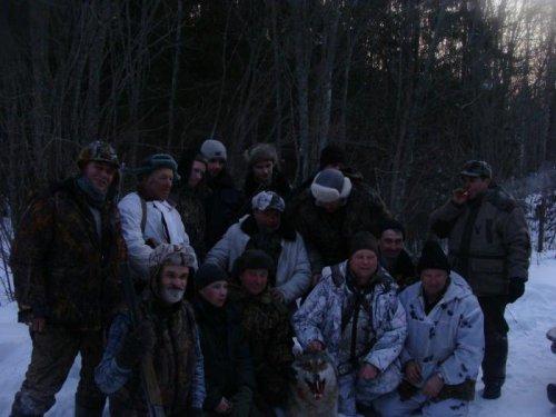 охота на волков .февраль 2012г Вологда
