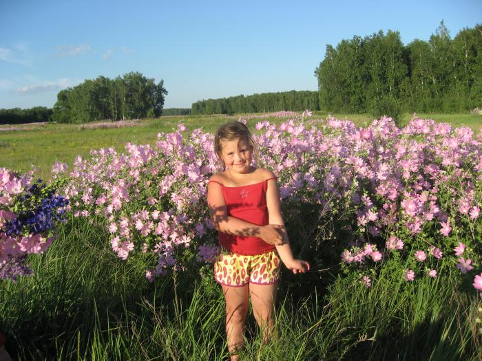 лето западной сибири