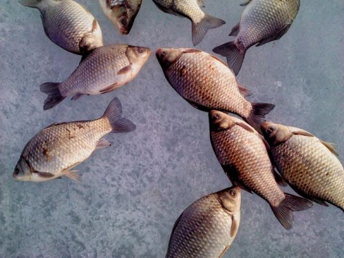 Немного рыбки.